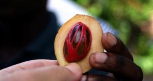 Мускатный орех польза и вред