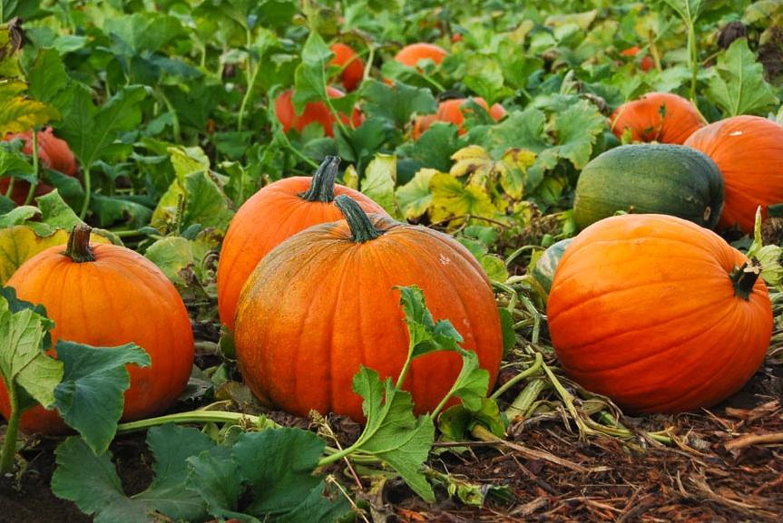 Овощи и фрукты в качестве народных мочегонных средств