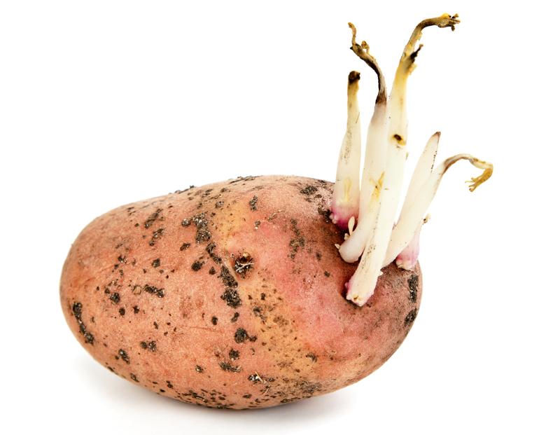 Спектр действия настойки картофельных ростков