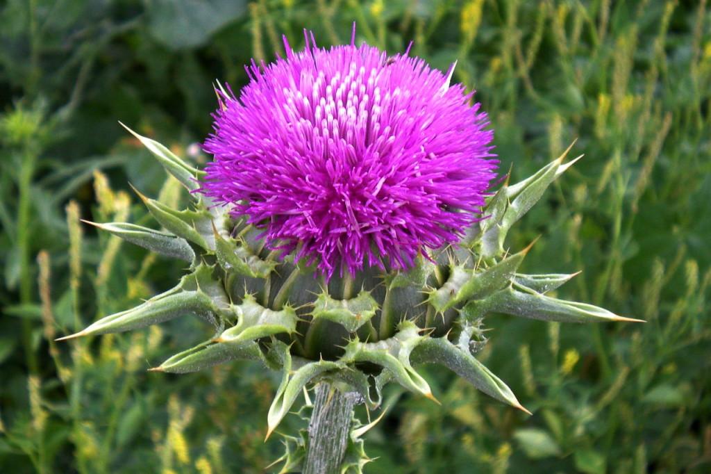 Факты, подтверждающие полезность масла из этого удивительного растения