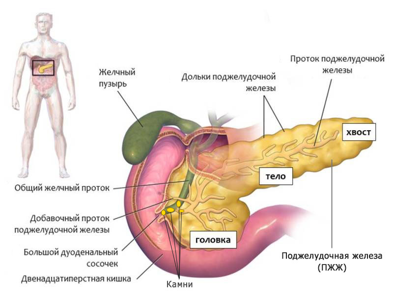 лечить повышенный холестерин у женщин